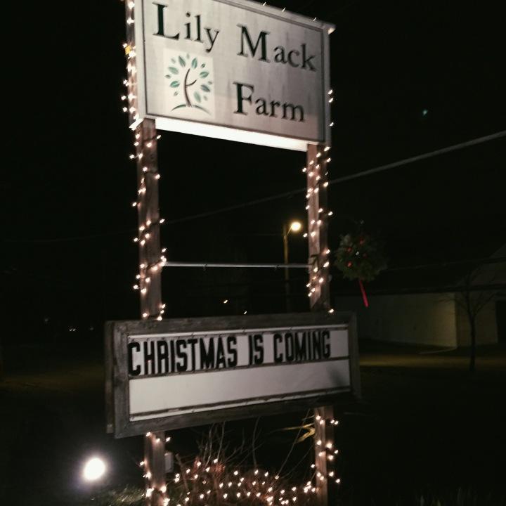 lily mack farm dracut ma