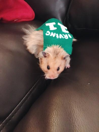 hamster celtics jersey