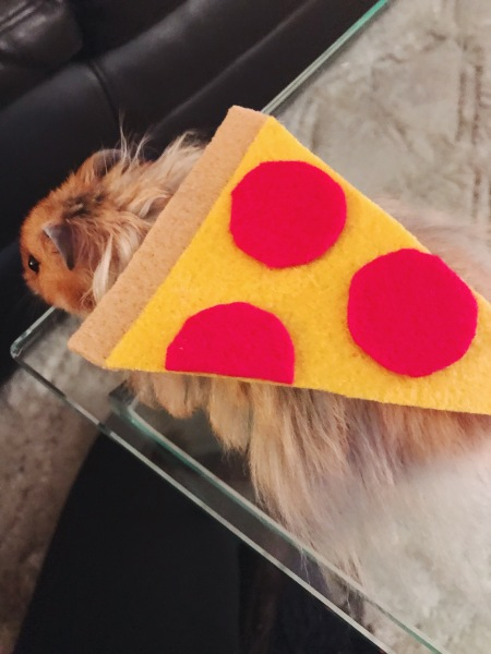 hamster pizza costume