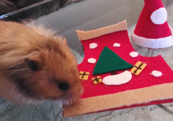 hamster christmas sweater