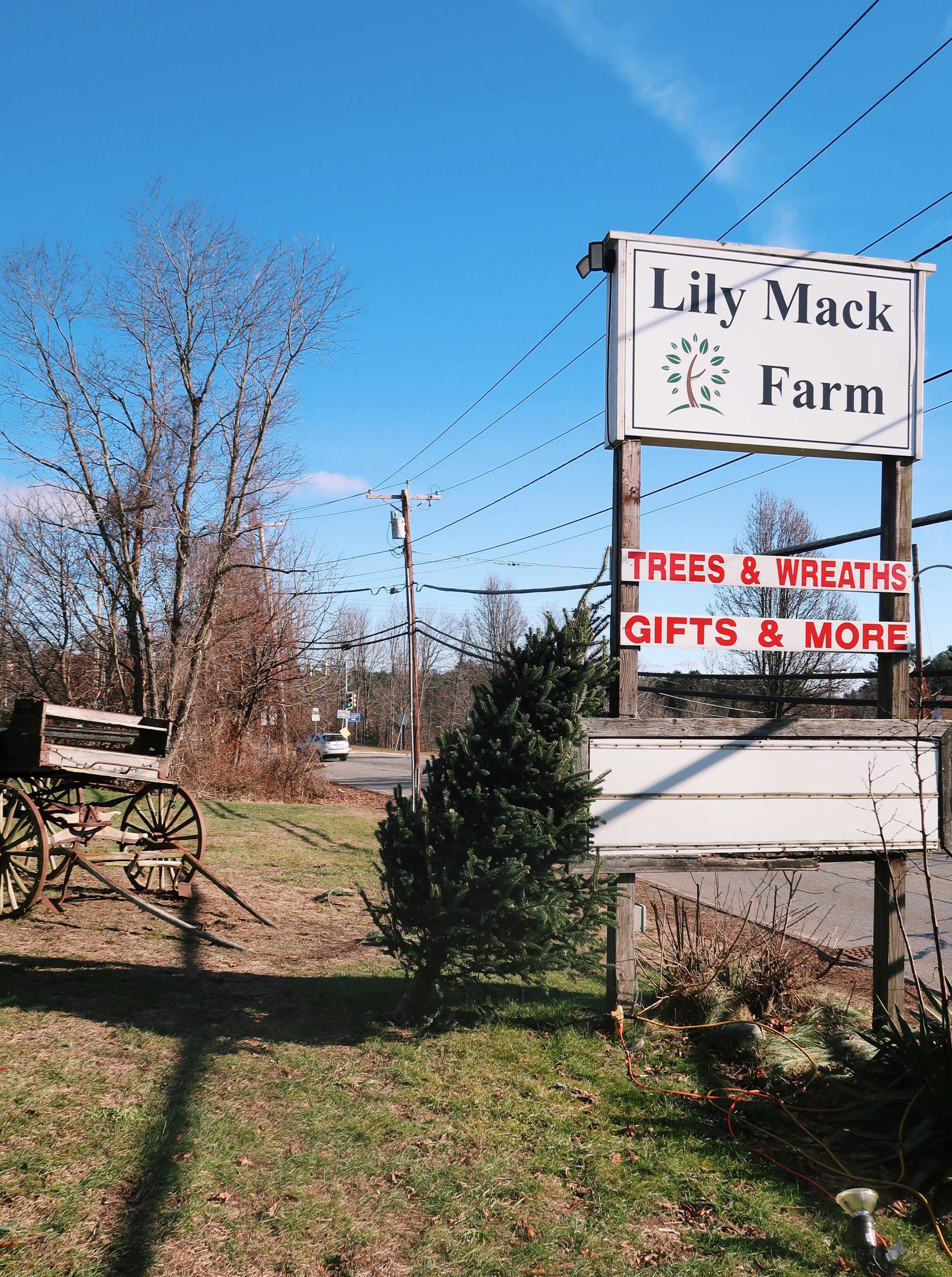 lily mack farm dracut