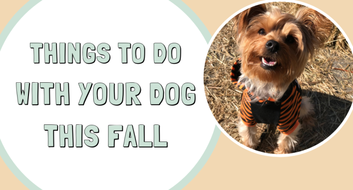 dog-friendly fall activities